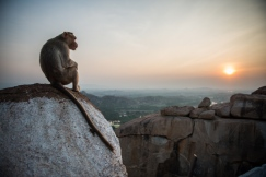 At-Hanuman-Temple-even-the-monkeys-enjoy-watching-the-sunset-